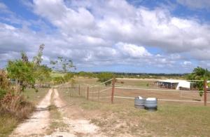 Premier Stud Farm, Neils Plantation, St. Michael, Barbados