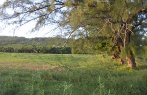 Morgan Lewis Plantation, Lot 8, St. Andrew, Barbados