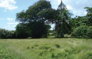 Rockley Cane Garden Land