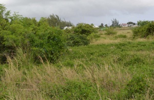 Green Point Lot, Land Side 5.3 Acres